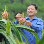 Thị trường - Tiêu dùng - Nông sản vẫn cần xuất khẩu tiểu ngạch