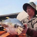 Thị trường - Tiêu dùng - Ngư dân Quảng Ngãi trúng lớn cá ngừ đại dương