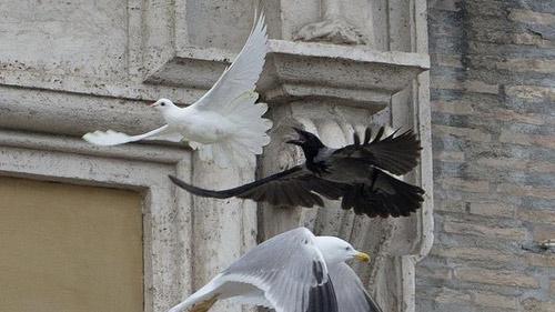 Bồ câu hòa bình của Giáo hoàng bị tấn công - 3