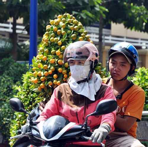 Mỹ Tho: Rực rỡ đường hoa Hùng Vương - 11