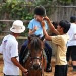 Thể thao - Học cưỡi ngựa ngay tại Hà Nội