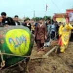 """Tin tức trong ngày - Tái hiện """"vua cày ruộng"""" trong lễ hội Tịch điền"""