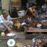 Nguy cơ bùng phát cúm gia cầm ở Việt Nam