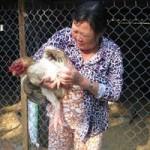 Thị trường - Tiêu dùng - Kinh nghiệm nuôi gà Đông Tảo thu bạc triệu