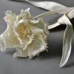 Phi thường - kỳ quặc - Những cành hoa từ xương động vật chết