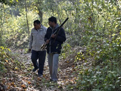 Ấn Độ: Ăn thịt 10 người, hổ dữ thoát bẫy thợ săn - 2