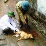 Tin tức trong ngày - Bùng phát dịch chó dại, 10 người thương vong