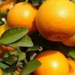 Sức khỏe đời sống - Các vị thuốc tốt cho tiêu hóa