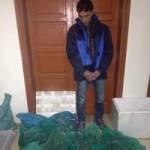 Tin tức trong ngày - Mua hàng chục rắn hổ mang chúa về nhà nuôi