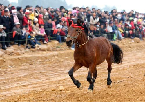 Xem kỵ sỹ cao nguyên trắng đua ngựa tại Hà Nội - 10