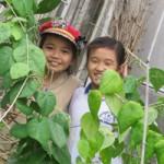 Thị trường - Tiêu dùng - Làm sâm nam ở Phú Yên: Nghề lạ mà sung túc