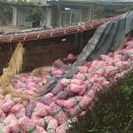 Tin tức trong ngày - Xe tải chở 10 tấn tỏi nổ lốp, lật nhào xuống ruộng
