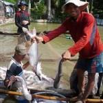 Thị trường - Tiêu dùng - Xuất khẩu cá tra: Tìm hướng đi mới