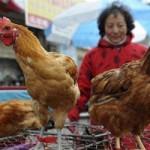 Sức khỏe đời sống - Sau cúm A/H5N1, H7N9, có phải là H10N8?