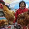 Sau cúm A/H5N1, H7N9, có phải là H10N8?