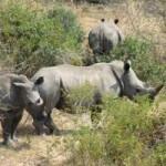 Tin tức trong ngày - Thủ tướng yêu cầu bảo tồn động vật hoang dã