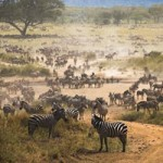 Du lịch - 10 công viên quốc gia hoang dã nhất châu Phi