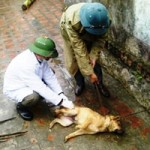 Tin tức trong ngày - Thanh Hóa: Thêm 1 người tử vong vì chó dại cắn