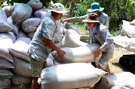 Giữ giá lúa gạo nhờ xuất khẩu tiểu ngạch - 1