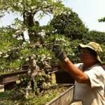 Thị trường - Tiêu dùng - Xuất khẩu cây cảnh bị làm khó