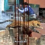 Tin tức trong ngày - Ấn Độ: Báo hoang đuổi người náo loạn thành phố