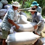 Thị trường - Tiêu dùng - Giữ giá lúa gạo nhờ xuất khẩu tiểu ngạch