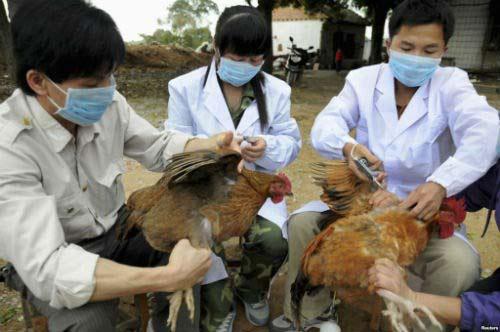Dịch cúm H5N1 xuất hiện ở 21 tỉnh - 1