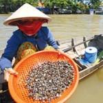 Ẩm thực - Về hồ Sông Ray ăn hến