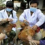 Dịch cúm H5N1 xuất hiện ở 21 tỉnh