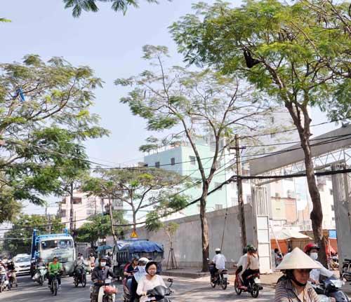 """Ong mật """"hội tụ"""" trên đường phố Sài Gòn - 1"""