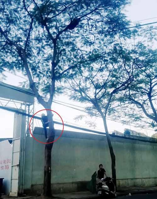 """Ong mật """"hội tụ"""" trên đường phố Sài Gòn - 4"""