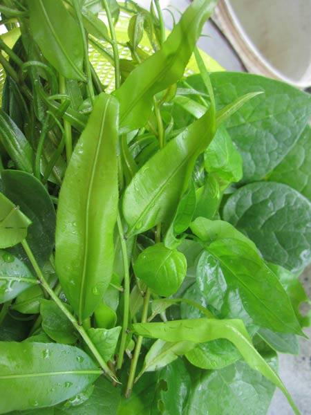 Ngọt, lành canh rau dại vườn nhà - 2