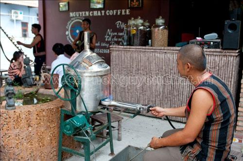 Cà phê sạch của NGUYEN CHAT COFFEE lên ngôi - 5