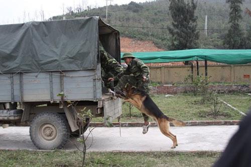 Ảnh: Theo chân chiến sĩ biên phòng đi tuần tra - 3