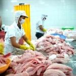 Thị trường - Tiêu dùng - Cá tra Việt Nam sẽ trở lại thị trường Nga