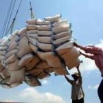Thị trường - Tiêu dùng - Hạ giá bán, gạo Việt tìm đường sang Trung Quốc