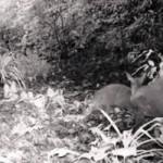 Tin tức trong ngày - Thanh Hóa: Xuất hiện loài mang tuyệt chủng 84 năm