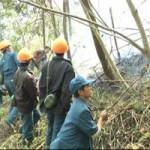 Tin tức trong ngày - Thủ tướng: Xử lý nghiêm hành vi để xảy ra cháy rừng