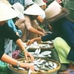 Ẩm thực - Cá mòi sông Thu, đặc sản quê tôi