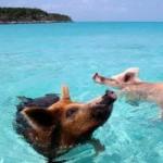 Du lịch - Những hòn đảo thiên đường của động vật
