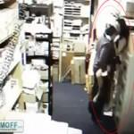Video Clip Cười - Clip bắt quả tang một đôi trong nhà kho