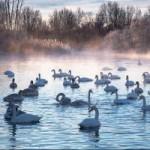 """Du lịch - Đẹp """"tê tái"""" hồ Thiên Nga trong mùa đông chết"""