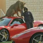 Ô tô - Xe máy - Người đàn ông sở hữu nhiều siêu xe và sư tử