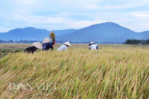 Bình minh trên núi mắng Trời ở Bình Định - 3