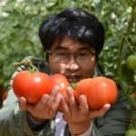 Thị trường - Tiêu dùng - Cà chua Lâm Đồng bị vạ lây vì cà Trung Quốc