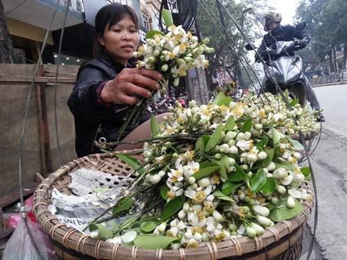 Hoa bưởi giá 250.000 đồng/kg hút khách Hà Nội - 2