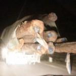 """Tin tức trong ngày - Cận cảnh """"xe vua"""" chở gỗ khủng qua mặt CSGT"""