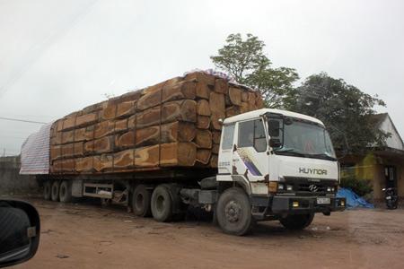 """CSGT để """"xe vua"""" ngang nhiên chở gỗ phá quốc lộ? - 1"""