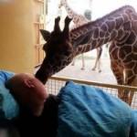 Tin tức trong ngày - Hươu cao cổ hôn vĩnh biệt nhân viên sở thú