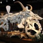 Phi thường - kỳ quặc - Xe máy bằng xương động vật giá 55 nghìn đô